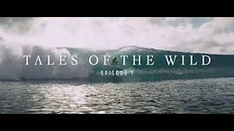Tales of the Wild by Sauvage – Episode 1 – SOLACE - YouTube
