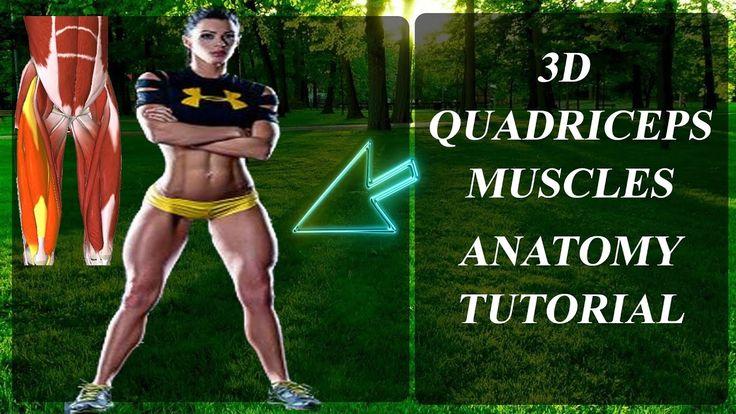 ÖN BACAK Kasları 3D İskelet Anatomisi | ANATOMY QUADRICEPS |ENG.SUB.