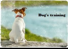 As humans, we must have proper behaviour in the same way dogs must also have proper behaviour, so that no other person is not created with any kind of problem with your dog. In manydog's training guide, behaviour training is one of the important concepts. Dog's training is not done just in couple of days ...