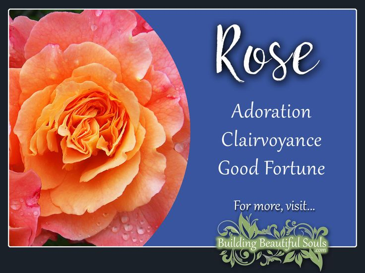 The June birth flower, Rose is a powerful flower! Delve deeply into Rose Meaning & Symbolism! Get Rose Color Meanings, Spiritual Meanings & History! #rose #flowers #floriography #floweressence #nature #garden
