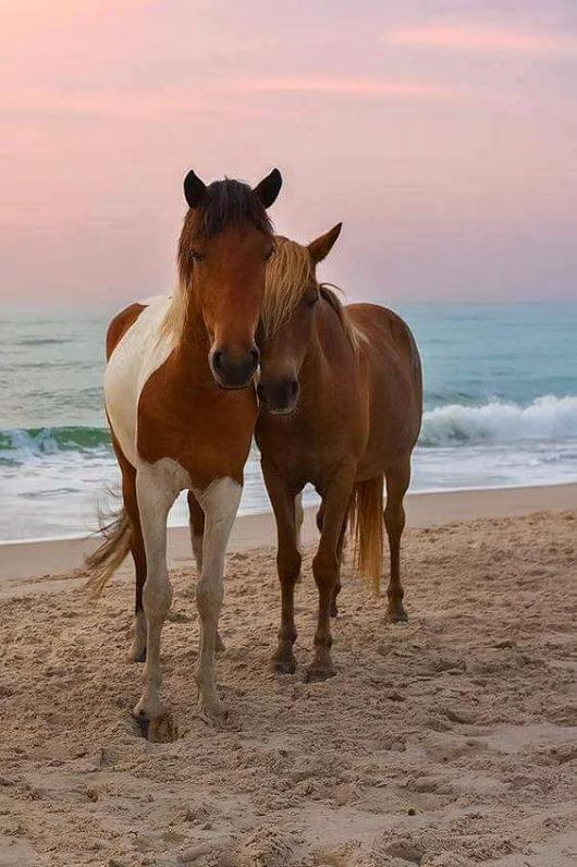 Snuggling horses on the beach in dreamy pastel sunset.