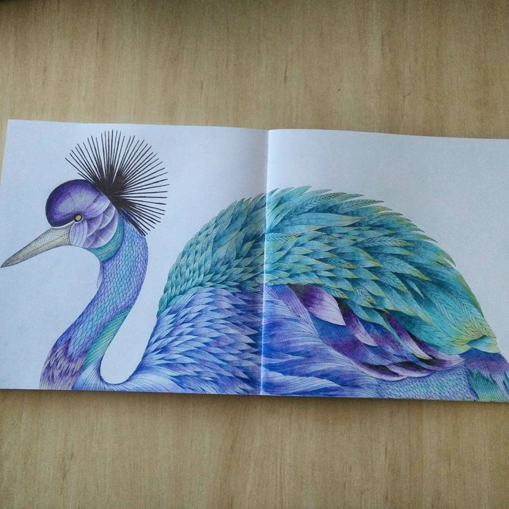 Finally Finished This Beautiful Bird Find Pin And More On Tropical Wonderland Coloring Book