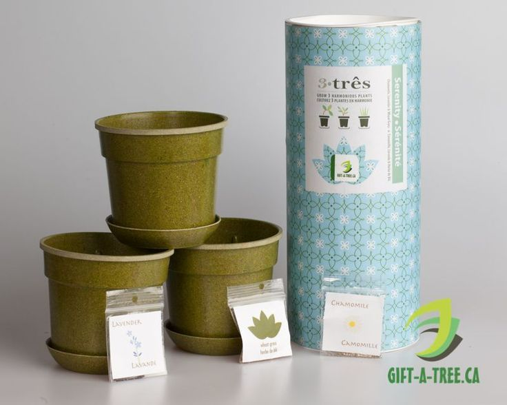 Tre-Serenity. Includes Chamomile, Lavender, and Wheat Grass. Find at: http://www.gift-a-tree.ca/apps/webstore/products/show/3744924