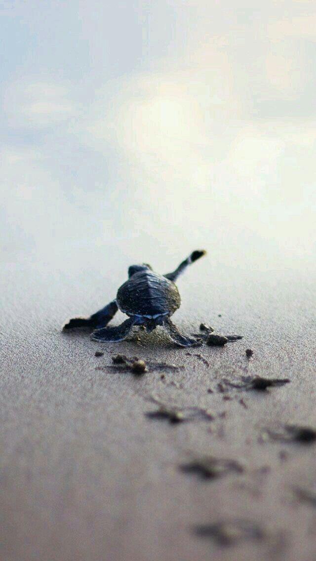 Pasito a paso hacia el mar ...