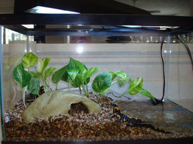 17 Best images about Future newt?! on Pinterest | Poison ... 10 Gallon Dart Frog Vivarium