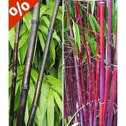 Die besten 25+ Chinesische bambuspflanze Ideen auf Pinterest - japanischer garten bambus