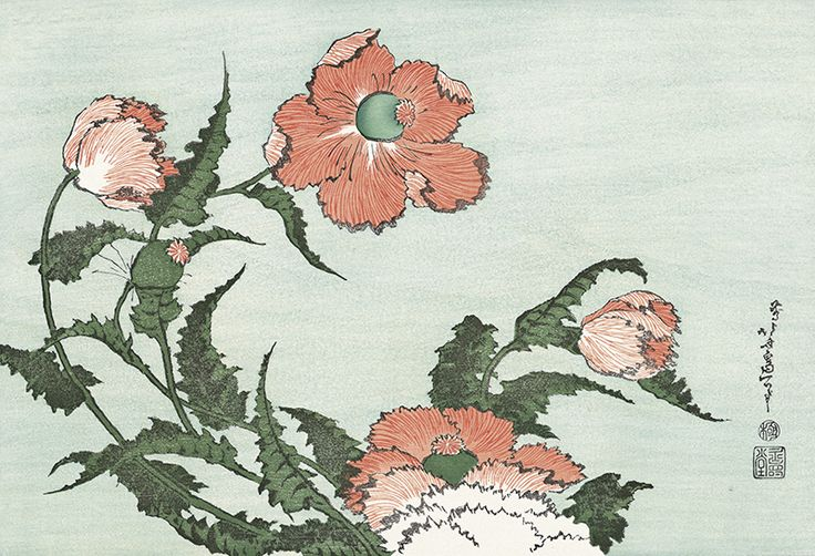 Hokusai/ Poppies, from an untitled Oban series of Flower and Bird