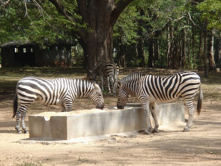 The Mysore Zoo animals have been procured from different parts of the world