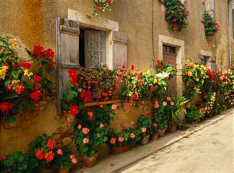 European: Favorite Places, Art Prints, Boxes Ideas, Flowers Boxes, Beautiful Flowers, Art Com, Flowers Window, Flowers Plants Gardens, Flowers Everywh