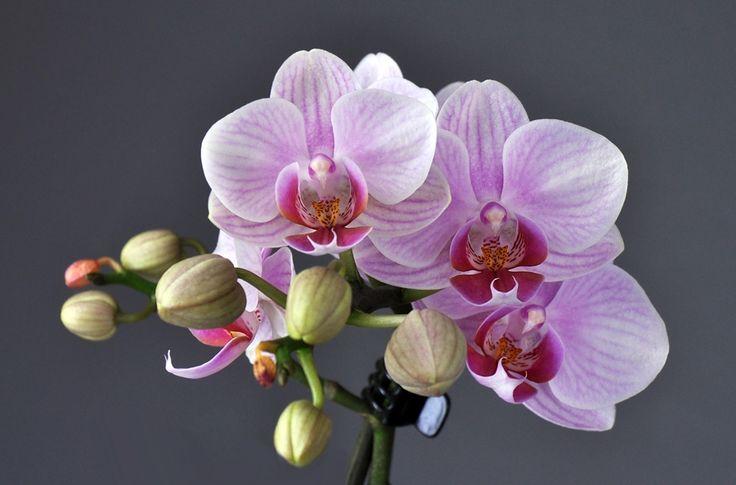 orchidee - Google zoeken