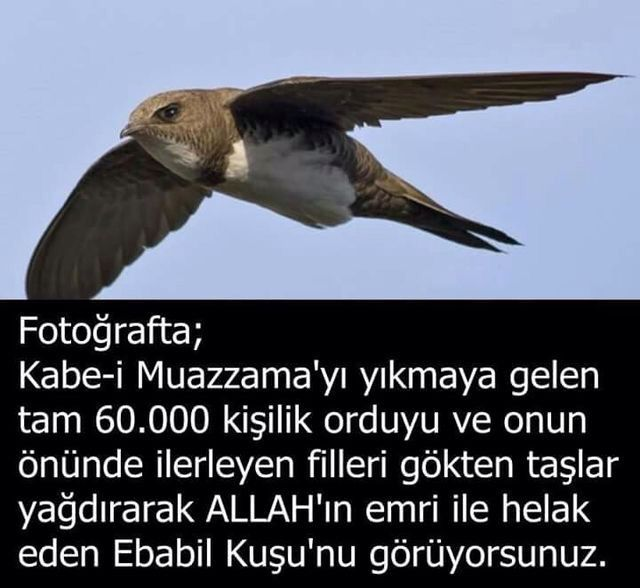 EBABİL KUŞU...