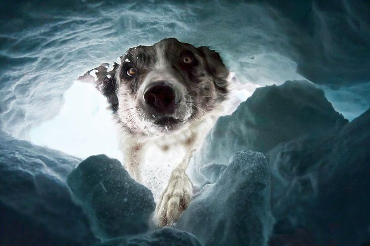 The avalanche rescuedog by Dalia Fichmann on yourshot.nationalgeographic.com