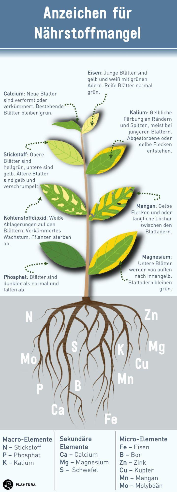 Bio Universaldunger Von Anzeichen Fur Nahrstoffmangel Auch Eine Pflanze Benotigt Nahrstoffe Um Zu Gedeihen D Organic Gardening Organic Fertilizer Fertilizer