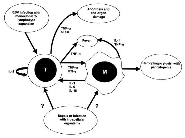 Schematic representation of possible immunopathologic mechanisms in infection-associated hemophagocytic lymphohistiocytosis (HLH). In Epstei...