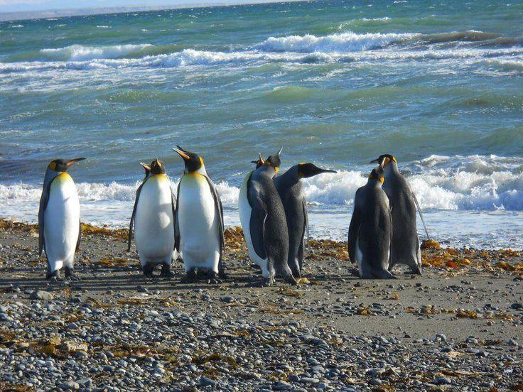 Extremo sur de Chile , Conversacion  Pinguina