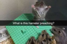 The Best Funny Animal Pictures Ever 4014