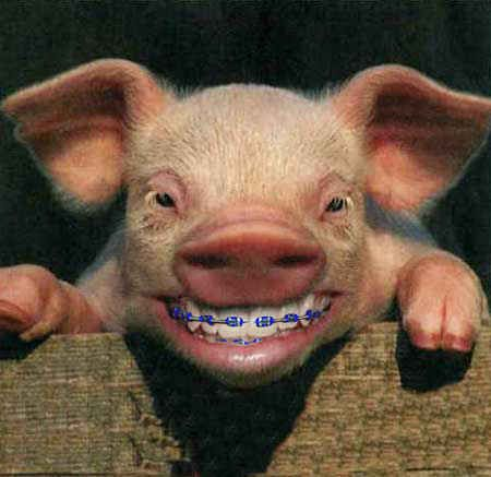 This piglet. | 14 Animals With Braces That Will Make You Smile
