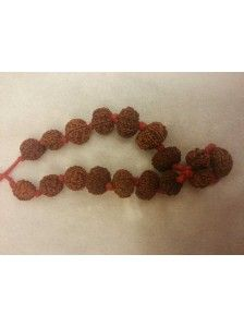 Nithya Mala: Special combination of different powerful rudraksha beads. Wearing that mala you will achieve great #success, #happiness, #name and #fame, #prosperity in #business. Your mental and #physical #strength will increase. Who #wears it can expect blessings of #Laxmi and #Saraswati. Wearer is considered the most #fortunate person. He can cure himself from malefic effect of #nine 3planets.