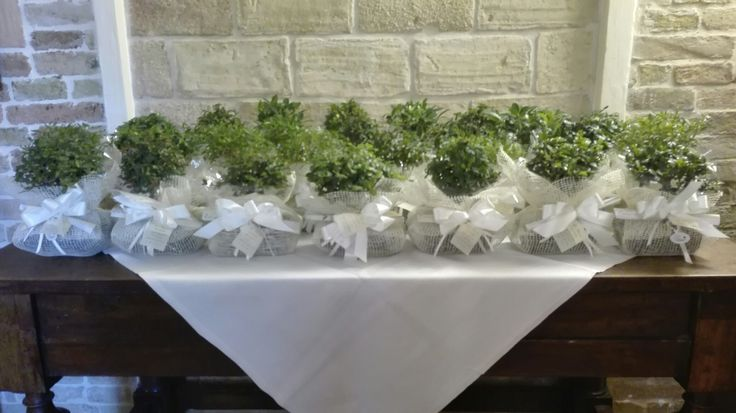 green #wedding, #matrimonio in perfetto stile #greenery 2017 #bomboniera mini #bonsai #location elegante