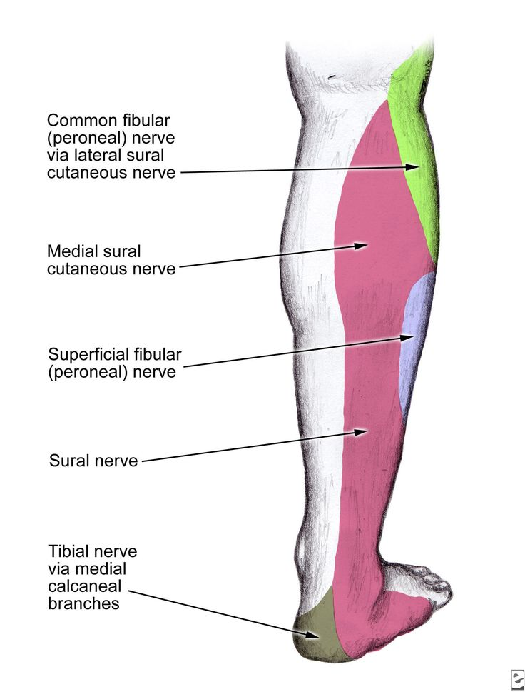 9 best sural nerve images on pinterest | ankle, foot pain and exercise, Human Body