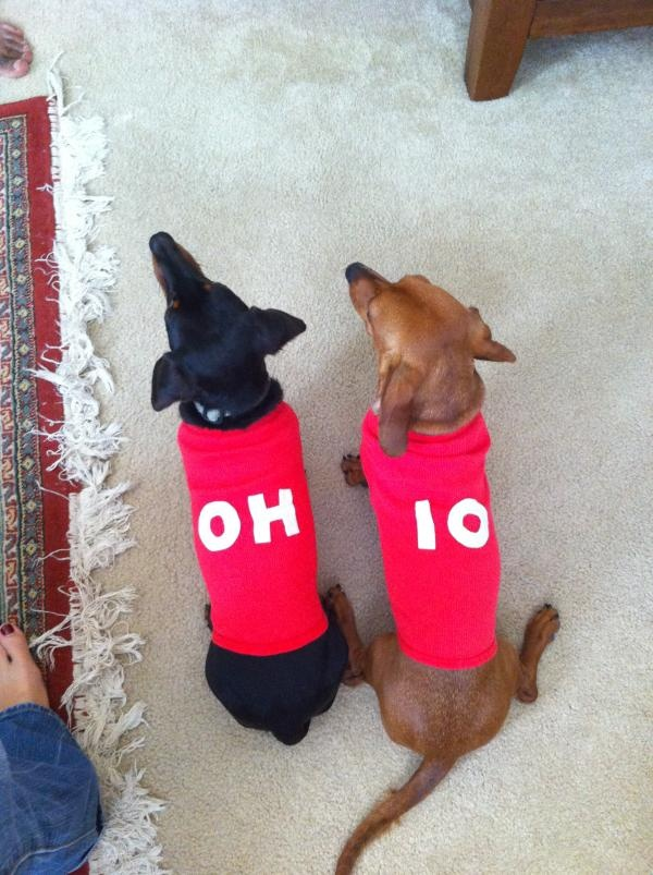 The wiener dogs love OSU Football! GO BUCKS!