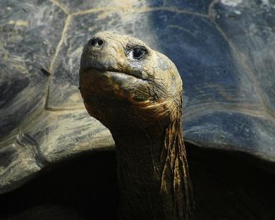 Galapagos IslandsFamilies Trips, Galapagos Islands