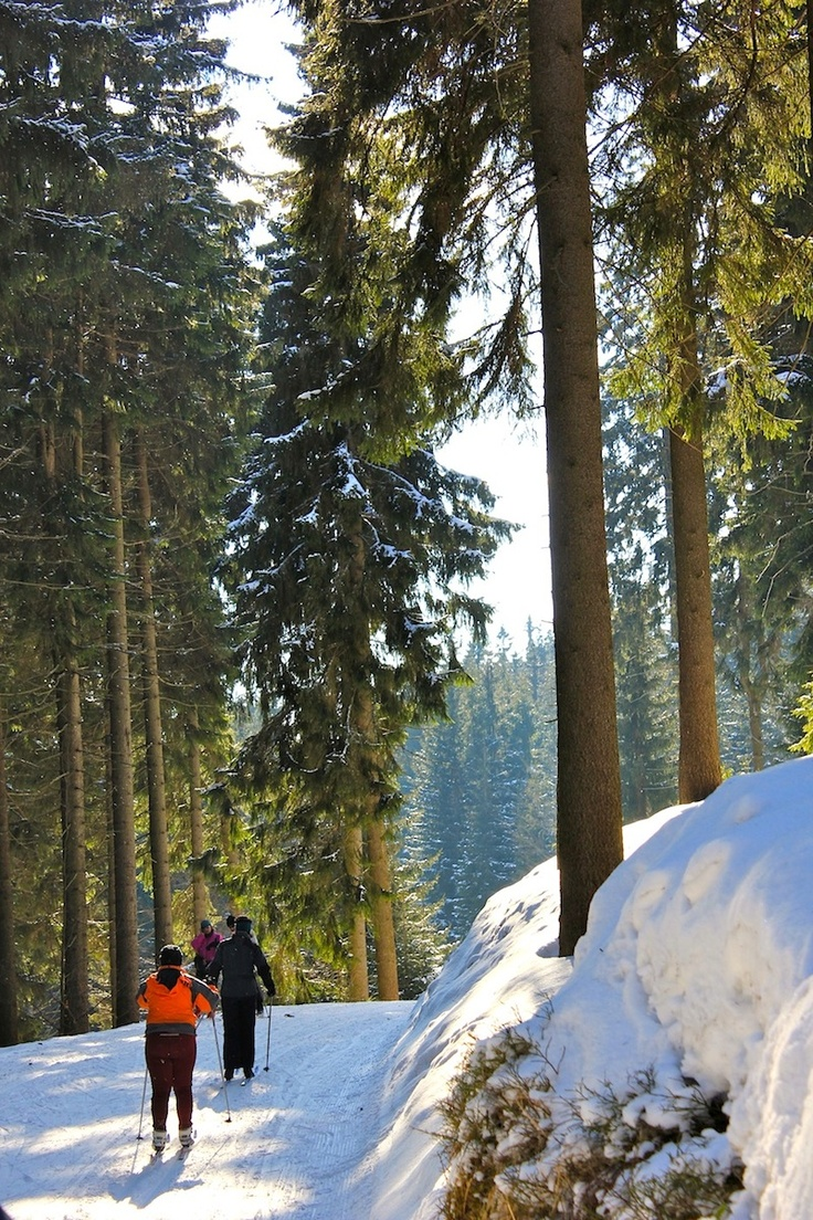 March 16, 2013. Cross country skiing is abundant and scenic in Spindleruv Mlyn and Krkonose National Park in Czech Republic.