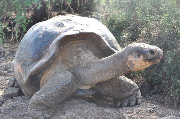 Ecuador, Galapagos, Peru & Bolivia. Adventuredk. Travling. Travel. Nature. Culture. Turtle