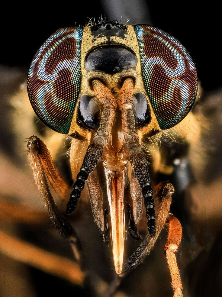 Os 25 Melhores Closes Em Olhos De Abelhas Que Você Vai Ver