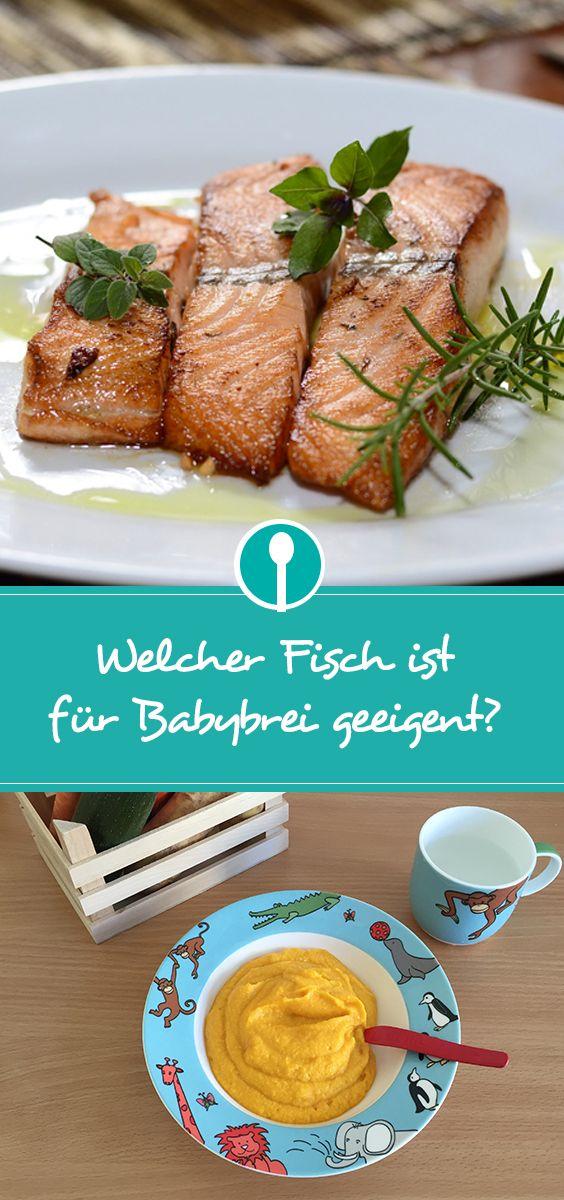 Welcher Fisch ist am besten für Babybrei und Beikost geeignet?