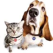 http://www.comparethebigcat.co.uk/insurancequotes/lifestyle/cheappetinsurancecomparison dog insurance