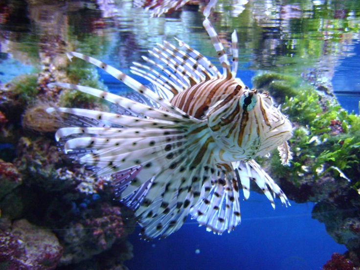 Gdynia - City Aquarium