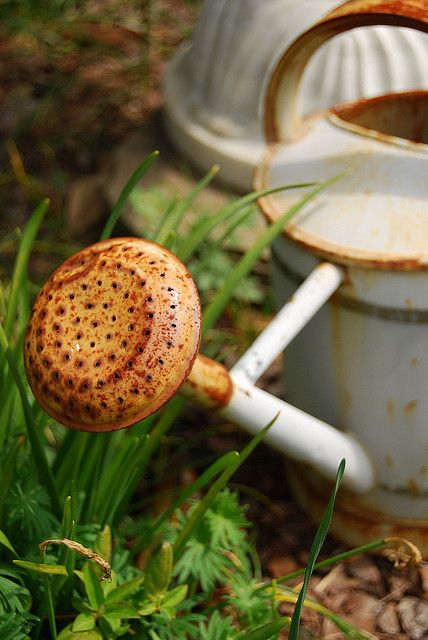 1000 images about old rusty things on pinterest planters vintage - 1000 Images About Watering Cans On Pinterest Gardens