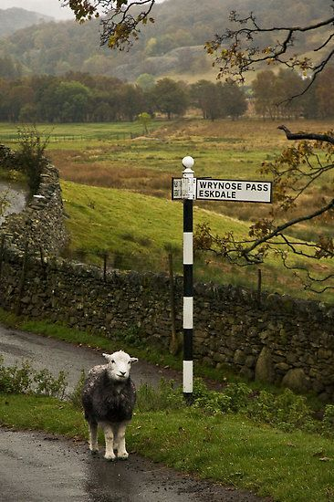 followthewestwind: (a través de Lost Sheep, Lake District, Inglaterra por Mark Howells-Mead | Anglomania)