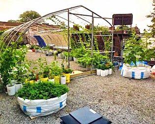 kebun sayuran  di atas atap rumah