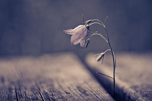 Bell | Mikko Lagerstedt: Relationships Quotes, Fresh Start, Flowers Stands, Real Life, Inspiration Photography, So Pretty, Mikko Stock Laid, Love Quotes, Little Flowers