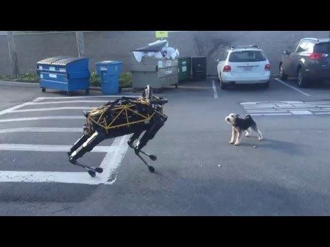 Robot Dog Meets Real Dog - What Happend? - http://www.dogisto.com/robot-dog-meets-real-dog/