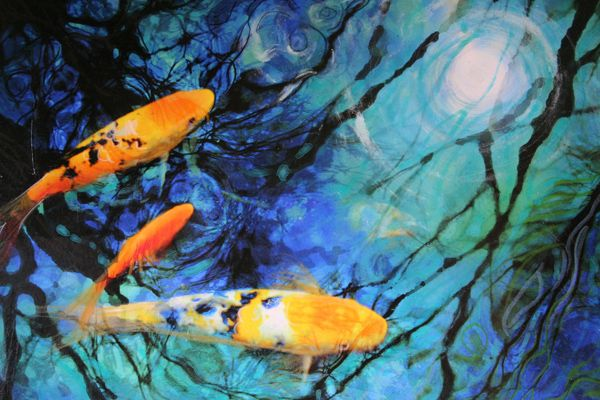 Take care of your koi fish pond appropriately water for Koi goldfish care