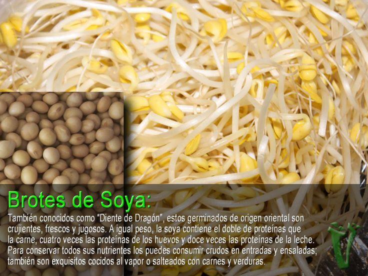 brotes o germinados de soya