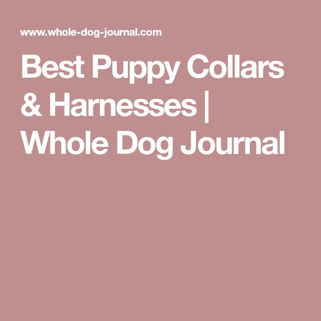 Best Puppy Collars & Harnesses | Whole Dog Journal