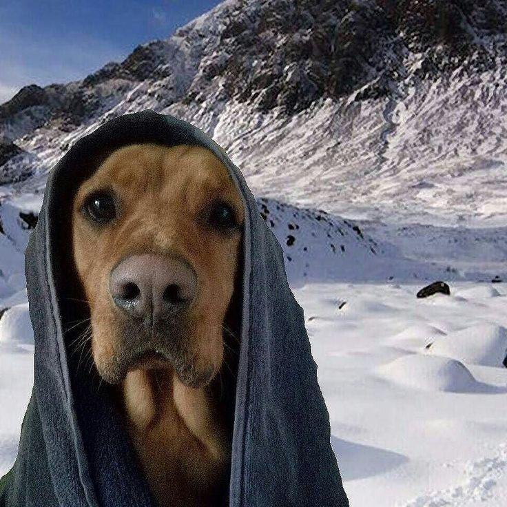 Come biasimare il povero Ugo che dal freddo ha rubato una coperta?!  Foto di: @beautyappeal_matteo  #BauSocial  Anche Ugo risente del freddo.. ti giri e te lo ritrovi così  Poi c è qualcuno che si diverte con il telefono.. vero @michelaugo ??   #mydog #ugo #ugonecanefifone #ice #freddo #neve #snow #selfie #cane #miocane #picofdog #follow #ugoselfie #canefreddoloso #dog #me #mountain #venafro #cane #doglovers #dogofinstagram #dogstagram #amazing #love #beautiful