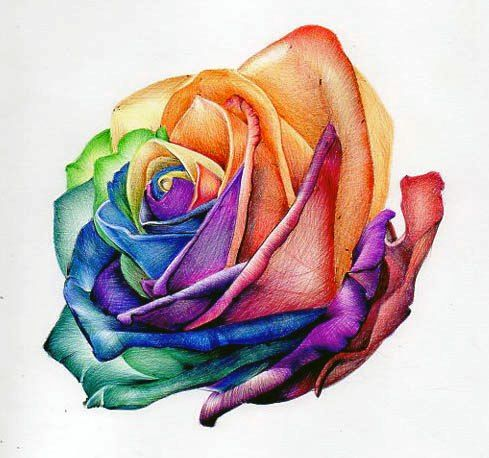 Angel Henry - Beautiful drawing of a rose using Biro pens. Different colours applied to catch attention and to keep it bright and alive.