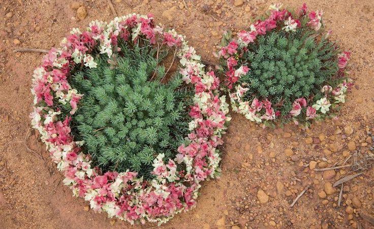 The Wreath flower - A Western Australian wildflower