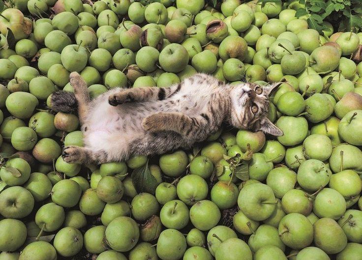 Кот в яблоках