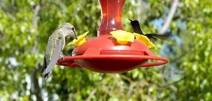 How to Make Hummingbird Food with Sugar   eHow