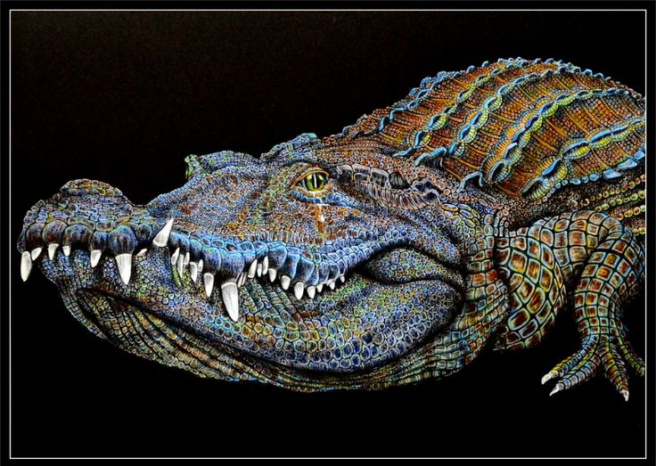 Ideal Colored Pencil Drawing Books