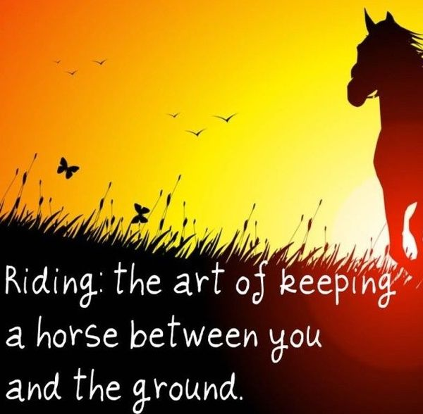 ---horsemanship is another thing altogether. :o) - Then there's 'Natural Horsemanship'. I don't like the term 'natural' horsemanship. There's nothing natural about riding a horse. They are a prey animal, and we're predators. But the horse lets us do it anyway, and I think that makes the animal even more worthy of our respect in my eyes. So I prefer the term 'Respectful Horsemanship'. But then that's just me being picky.