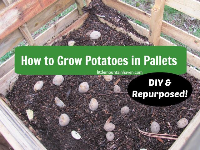 224 best yard fun images on pinterest gardening for What to grow in a pallet garden
