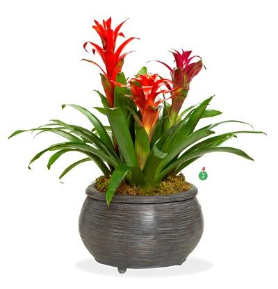 54 Best Bromeliads Images On Pinterest Plants Air