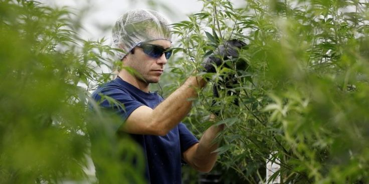 Cronos Group is the first marijuana company to list in US markets - Business Insider